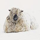 Cold ears? by Alan Mattison