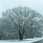 Natchez Trace Tree in Snow by Rocky Henriques