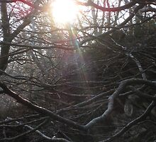 miniature rainbow through trees by millymuso