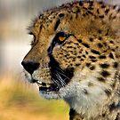Cheetah profile by HelenBeresford