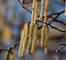 Spring is coming by Jon Lees
