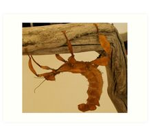 stick insect Art Print