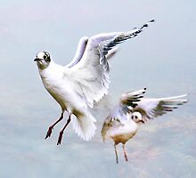 Seagulls by Sue Smith