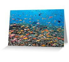 Rainbowed Sea Greeting Card