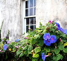 Vintage Morning Glories by Jenni Tanner