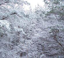 winter by DiamondRose