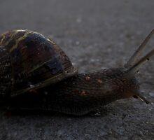 Snail Journey by Salien
