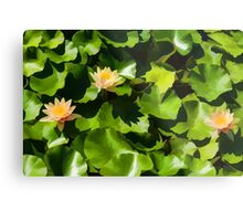 Light, Shadow and Color - Waterlily Pad Impression Metal Print