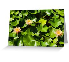 Light, Shadow and Color - Waterlily Pad Impression Greeting Card