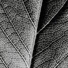 Leaf by Marloag