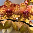 Twin Orchids by Mark Wuttke