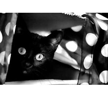 Spots before your eyes - or the polkadot cat Photographic Print