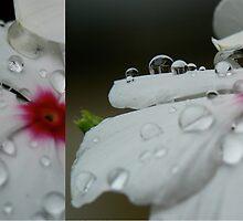 Delicate Dew Drops in Diptych by Nicole Remolde