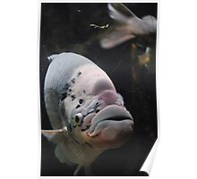 Jolly Large Fish Poster