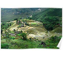 Rice Paddies, Sapa, Vietnam Poster