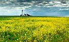 Pigeon Point Lighthouse & Mustard Field by Zane Paxton