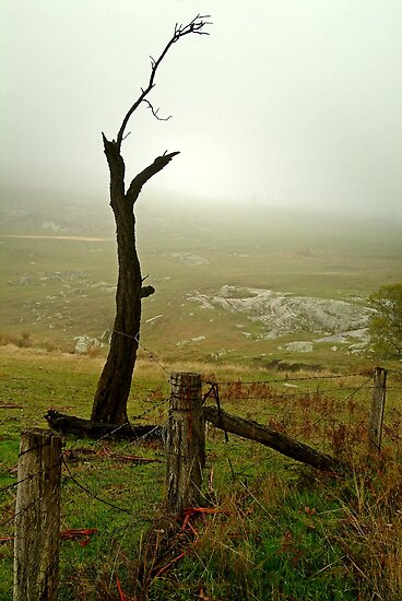 Macendon Ranges,A Damp Foggy Morning by Joe Mortelliti