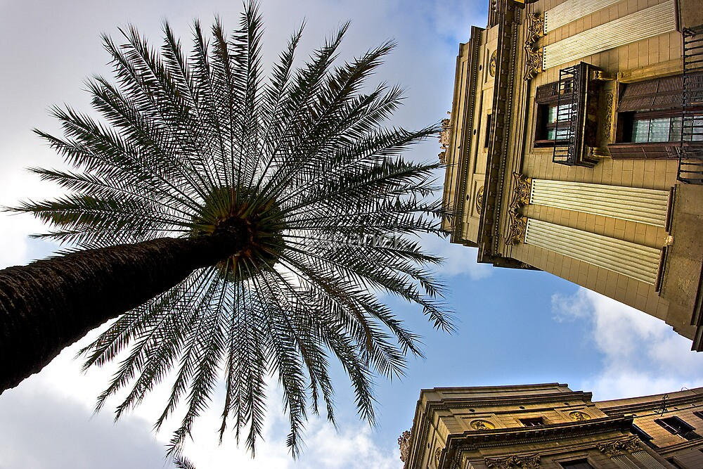 Palm Tree At Placa Reial in Barcelona by espanek