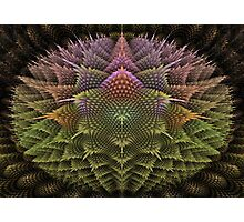 Fractal 43 Photographic Print