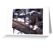 Jack Pine Trail Birding Greeting Card