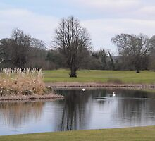 Swans on the Pond,,Mount Juliet Golf Course,Co.Kilkenny. by Pat Duggan