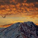 Flying High by Pat Moore