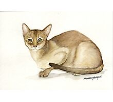 Abyssinian Cat Watercolor Photographic Print