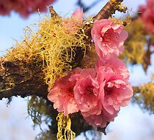 Moss blossoms by the57man