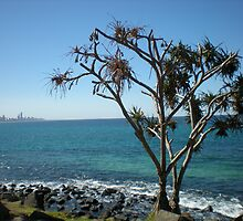 Another amazing day on the Coast - Burleigh, Gold Coast by Cassie Wentworth