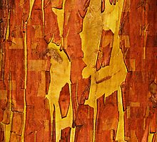 Bark Mosaic by tausterl