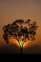 Ceratodus Sunrise by Gryphonn