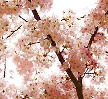 Pink Cherry Blossoms - Impressions Of Spring by Georgia Mizuleva