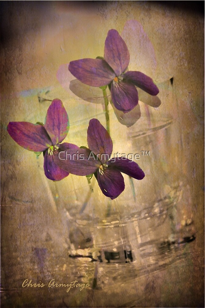 Violets by Chris Armytage™