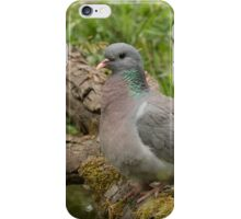 Stock Dove (Columba oenas) iPhone Case/Skin