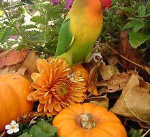 Nava the Lovebird  by Erin Clark