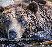 Grizzly Pose by Marie  Cardona