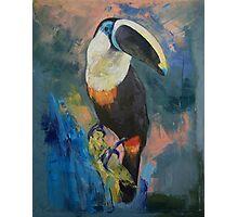 Rainforest Toucan Photographic Print