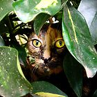 Kitten hiding in a bush by ambermay