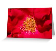 Wild Red Rose Greeting Card