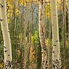 Aspens in the Fall by Bill Hendricks