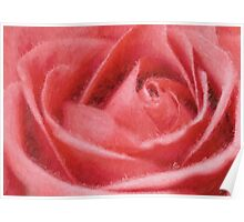 Valentine's rose Poster