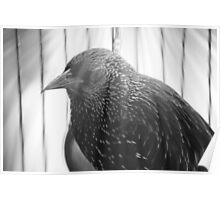Birdy Num Num Poster