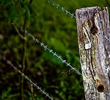 Fenceline by Daniel Peut