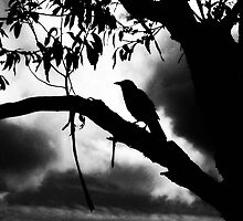 Crow by shutter-bug1