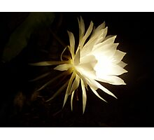 Queen of the night by torch light  Photographic Print
