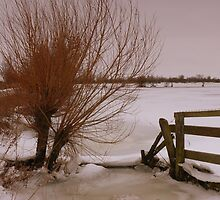 January in The Fens by ArtisanArts