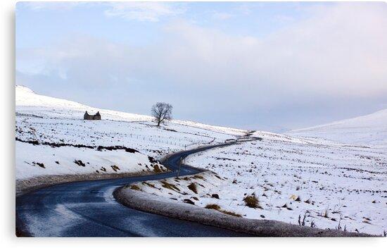 Desolate Living by Lynne Morris