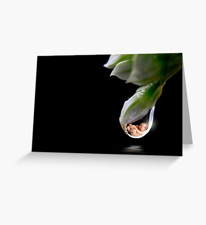 Will you catch me if I should fall? Greeting Card
