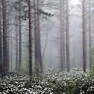 20.6.2015: Blooming Marsh Tea III by Petri Volanen