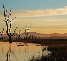 Flight, Lake Fyans, Grampians by Joe Mortelliti
